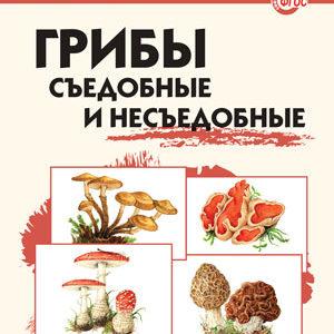 Сергеева М.Н. Грибы съедобные и несъедобные. Школьный словарик